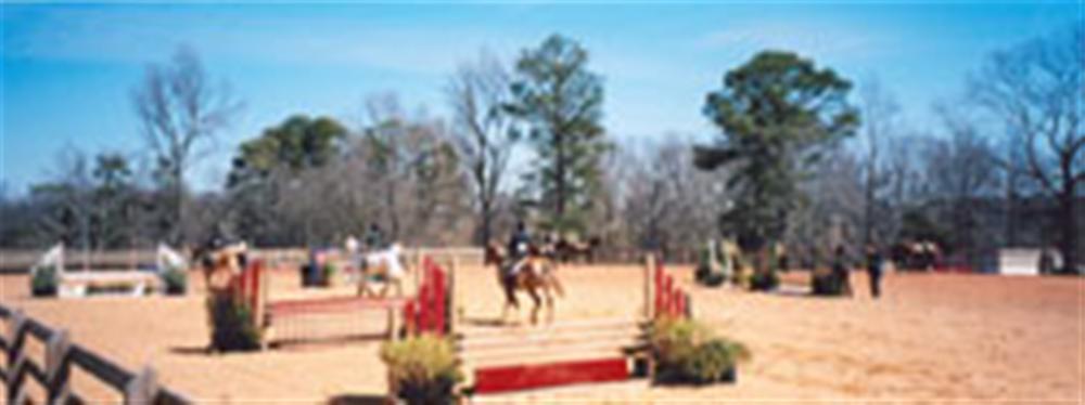 Auburn University Horse Unit