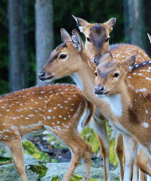 How to Hunt Your Deer