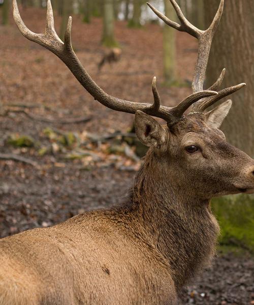 Deer Hunting Rifles: The Top 5 Picks