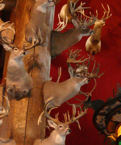 What can be Hunted in Texas?
