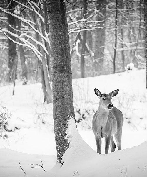 Deer Hunting Ground Blinds