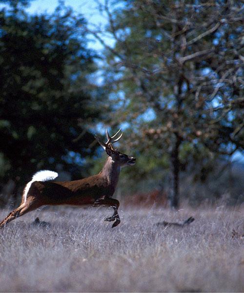 Deer Hunting Umbrella Blinds