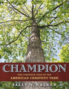 Review of Champion: The Comeback of the 