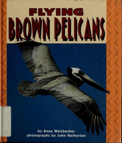 Flying Brown Pelicans