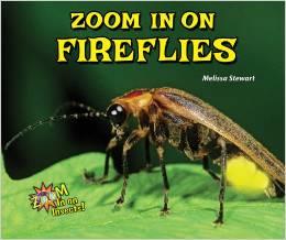 Zoom In on Fireflies