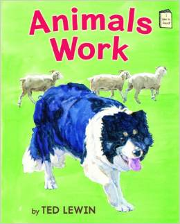 Animals Work