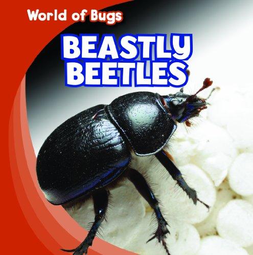 Beastly Beetles