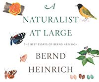 A Naturalist at Large: The Best Essays of Bernd Heinrich