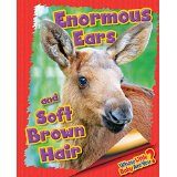 Enormous Ears and Soft Brown Hair (Moose)
