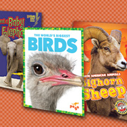 A Bevy of Pet Choices & More: Animals | Series Nonfiction