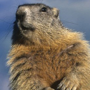 The Shadow Knows | Fact and Fiction About the Groundhog's Claim to Fame