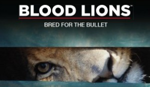 Blood Lions Bred for the Bullet
