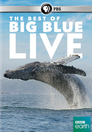 DVD_The Best of Big Blue Live
