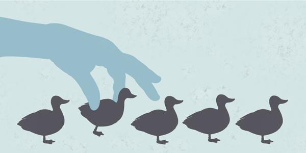 1608-TaketheLead-ducksinRow