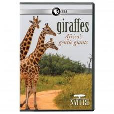 Giraffes: Africa's Gentle Giants | SLJ DVD Review