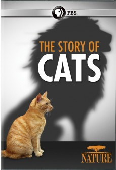 The Story of Cats | SLJ DVD Review