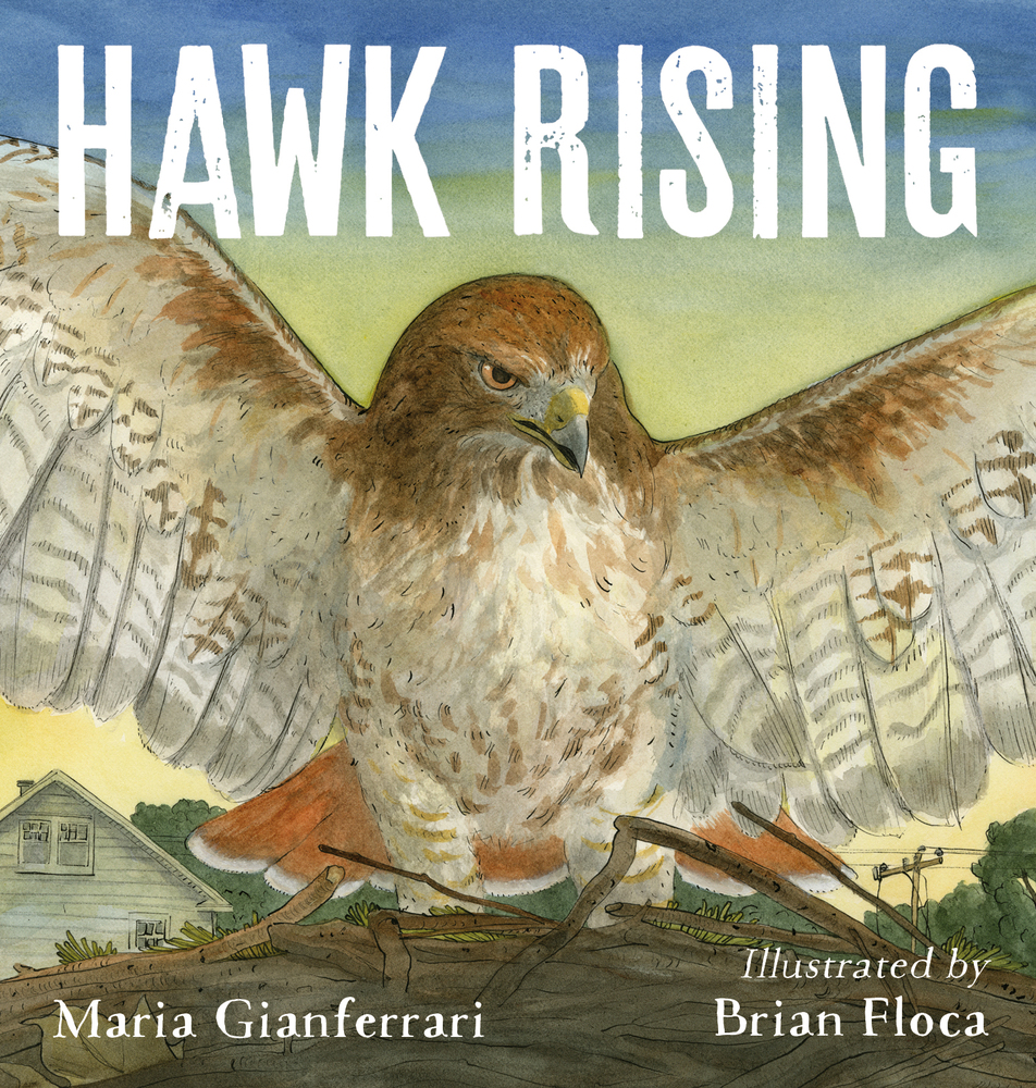 Hawk Rising by Maria Gianferrari | SLJ Review