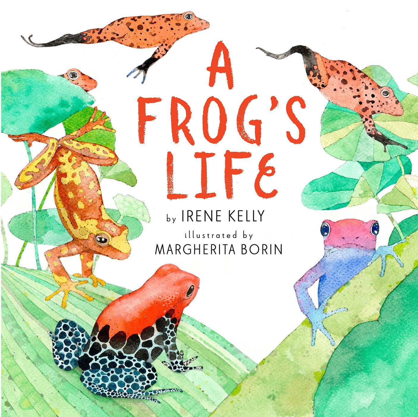 A Frog's Life by Irene Kelly | SLJ Review