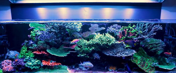 Dream Saltwater Aquarium
