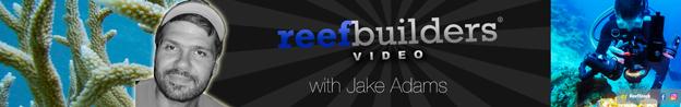 ReefBuilders YouTube Channel header art