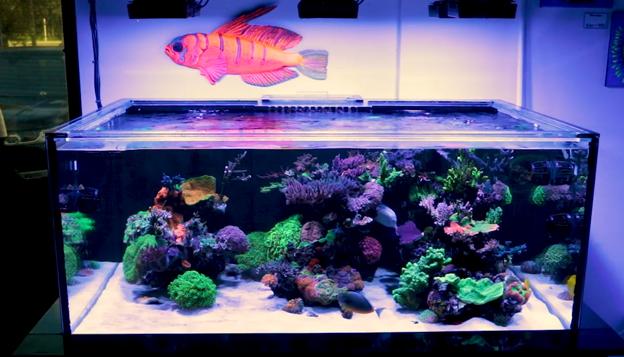lagoon style reef tank
