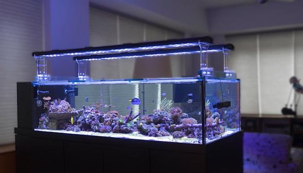 Peninsula Reef Tank