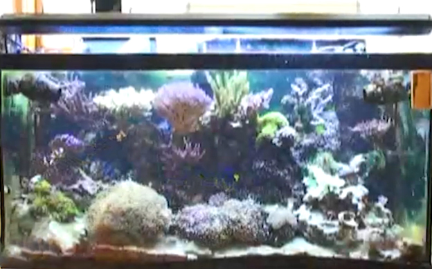 Ryan's 90 gallon reef tank