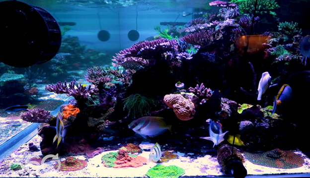 Side view of a large aquascape at World Wide Corals