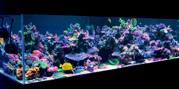 Display tank at world wide corals