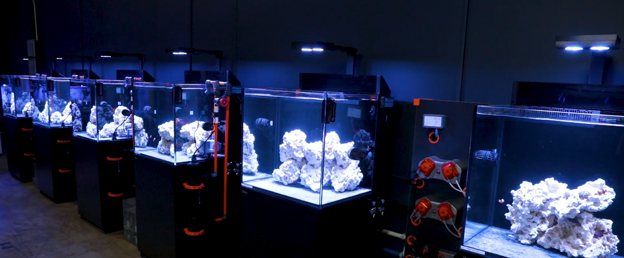 Red Sea E170 BRS Lab Tanks