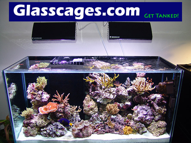 Glass Cages Reef Tank