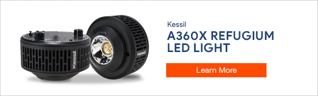 Kessil A360X Refugium
