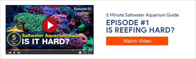 5 Minute Saltwater Aquarium Guide