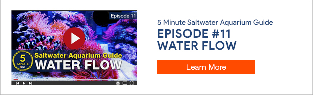 5 Minute Saltwater Aquarium Guide Episode 11