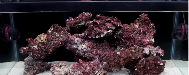 Hydor Koralia pumps in 40 breeder