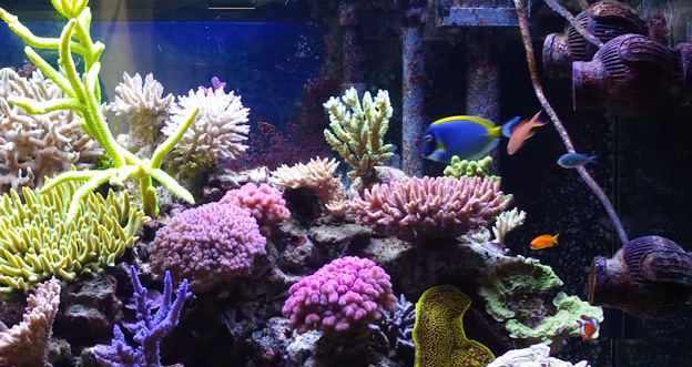 SPS Reef Tank with Tunze Pumps