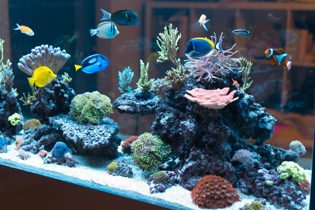 Large reef tank with fish