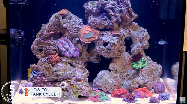 New fish tank