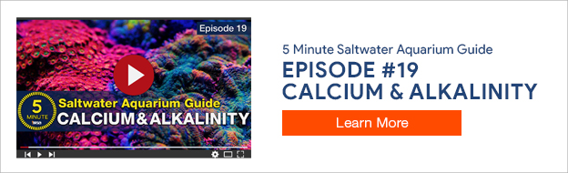 5 Minute Saltwater Aquarium Guide Episode #19