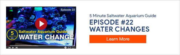 5 Minute Saltwater Aquarium Guide Episode #22