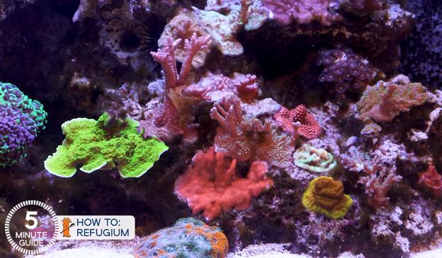 Algae growing in a reef tank