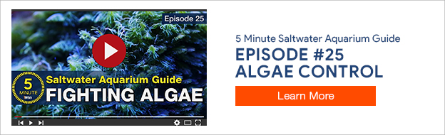 5 Minute Saltwater Aquarium Guide Episode #25
