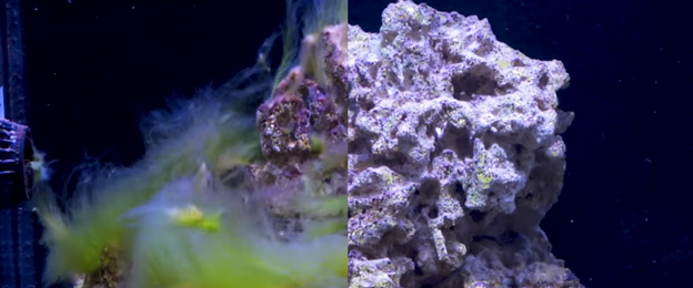Side by side algae rock vs clean rock