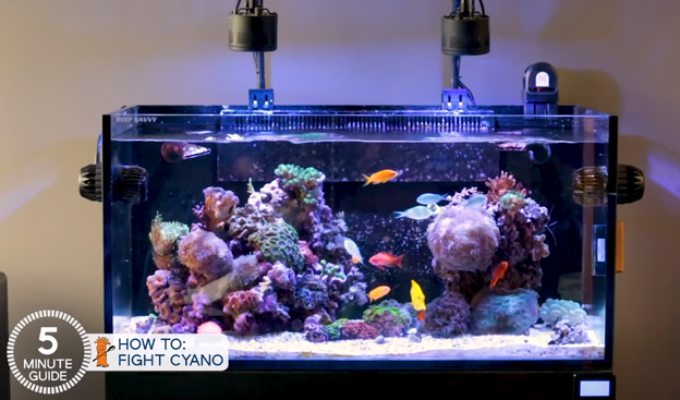 Ryan's Tank without Cyano