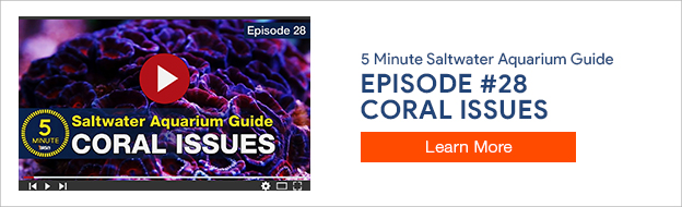 5 Minute Saltwater Aquarium Guide Episode #28