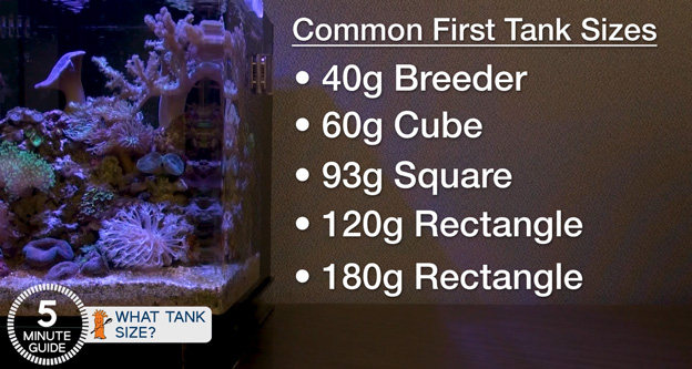 Best tank sizes for beginners