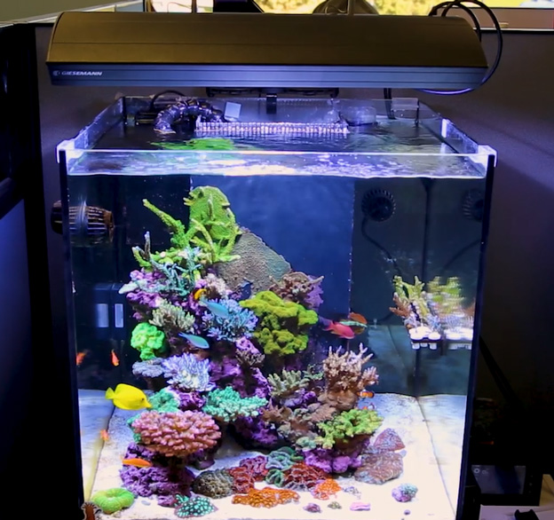 Cube shaped reef tank