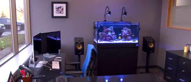 Ryan's office tank