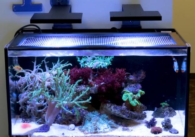 Innovative Marine NUVO aquarium