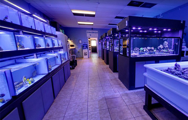 World Wide Corals fish holding tanks